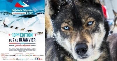 La Grande Odyssée : la course de chiens de traineaux à ne pas manquer !