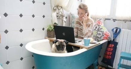 12 propriétaires et leurs chiens passent une étonnante journée de dog-working !