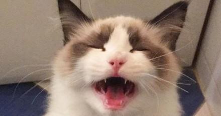 Ce chat a trouvé le meilleur des perchoirs : son humaine ! (Vidéo)