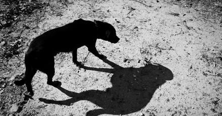 A la maison, ils entendent un hurlement glaçant : quand leur chien revient, il n'y a plus une seconde à perdre