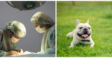 La vétérinaire fait une césarienne sur une chienne, la décision qu'elle prend ensuite est un scandale
