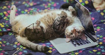 Pourquoi les chats aiment-ils s'allonger sur les ordinateurs ?