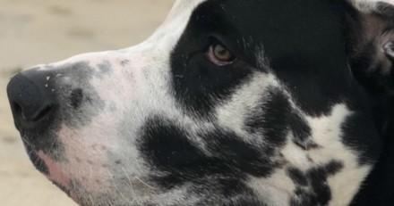 Ce chien a un chien dans l'oreille, et c'est assez incroyable !