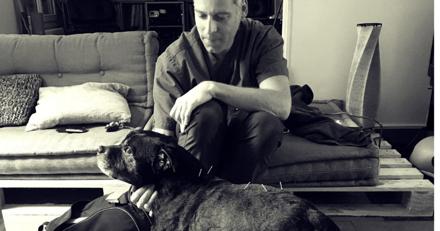 Ostéopathe pour animaux : un métier encore méconnu du grand public