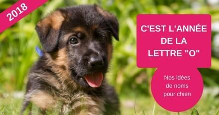 Nom de chien commençant par la lettre O : nos idées pour l'année 2018