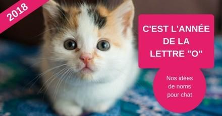 Nom de chat commençant par la lettre O : nos idées pour l'année 2018