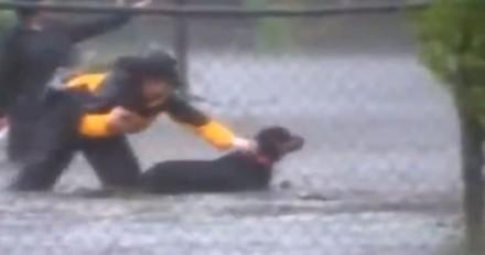 Ouragan Florence : Une journaliste interrompt son direct pour sauver un chien de la noyade (Vidéo)