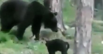 En pleine nature, un ours s'approche d'eux : leur chat s'interpose et fait l'impossible (Vidéo)