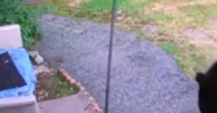 Il entend du bruit dans son jardin, sort précipitamment et a du mal à en croire ses yeux (Vidéo)