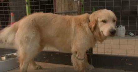 Incendies en Australie : un centre d'éducation canine ouvre ses portes aux chiens séparés de leurs familles