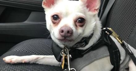 Il confie son chien à un pet-sitter et ne revient pas le chercher, jamais il n'aurait pu imaginer la suite