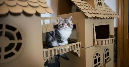 Elle a construit un palace pour son chat !