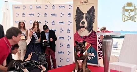 Festival de Cannes 2019 : la Palm Dog Wamiz récompensera le chien le plus talentueux du cinéma