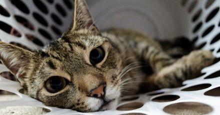 Mon panier à linge est-il dangereux pour mon chat ?