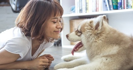 Pourquoi faut-il parler à son chien ?