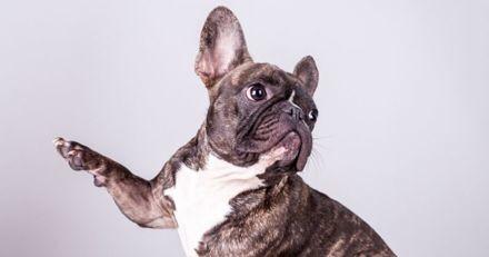 Votre chien est-il droitier ou gaucher ? Faites le test !
