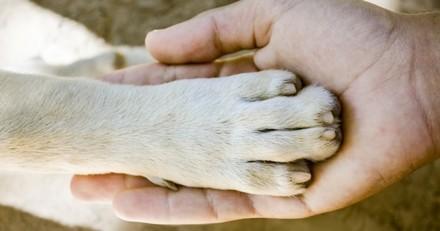 Un premier bilan positif pour Purina qui poursuit son engagement pour valoriser la relation Homme-animal