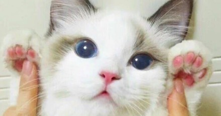 Mater des pattes de chat : la nouvelle tendance Instagram à laquelle on ne peut qu'adhérer