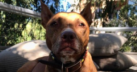 Sophia Bush pleure la perte de son chien Penny