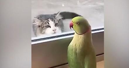 Rencontre insolite entre une perruche et un chat
