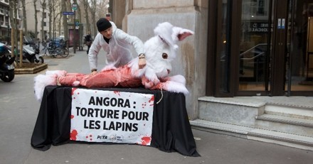 Un «lapin» géant mutilé en public pour dénoncer l'horreur des élevages d'angora