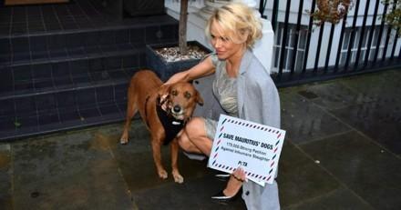 Alerte à l'Île Maurice : choquée par le traitement infligé aux chiens errants, Pamela Anderson gronde