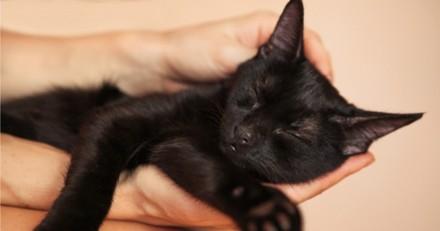 Après avoir sauvé un chat coincé dans une voiture, ce pompier a décidé de l'adopter