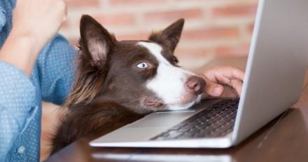 Emmenez votre animal au travail en toute sérénité avec le programme Pets at Work de Purina