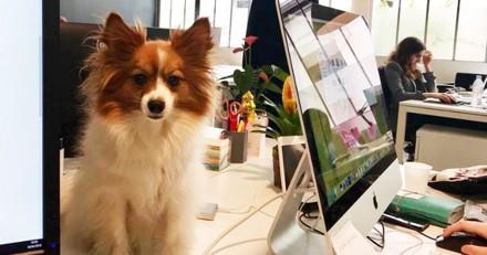Pourquoi un chien qui vient au bureau est plus heureux ?