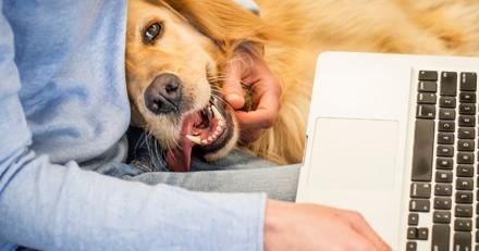 Le chien en entreprise : quelles conséquences ?