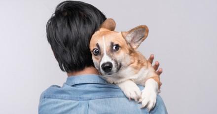 Le chien peut-il sentir notre peur ?