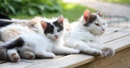 Comment bien nourrir son chat à chaque étape de sa vie ?