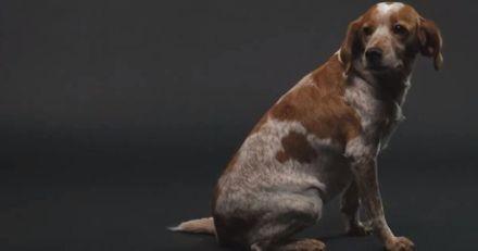 Nouvelle campagne choc de Défense de l'Animal contre la maltraitance animale (Vidéo)