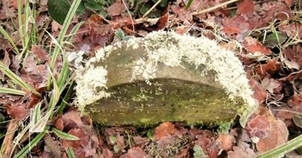 En pleine balade en forêt, il trébuche sur une pierre et se met à pleurer en réalisant la vérité