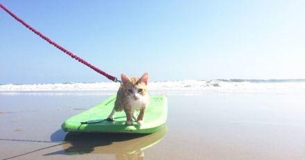 Un ancien chat errant s'essaie au surf et bouleverse le quotidien de nombreuses personnes