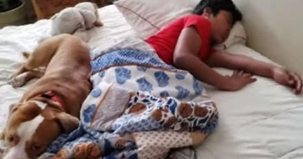 Le Pitbull surveille un enfant qui dort : tout d'un coup, la porte s'ouvre !