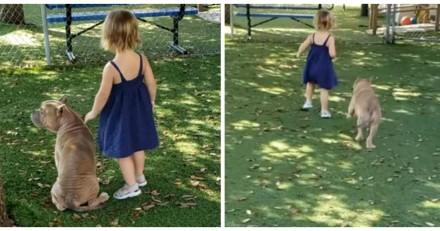 Une fillette de 2 ans s'approche d'un Pitbull malade dans un refuge : tout le monde se met à pleurer
