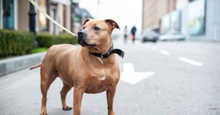 Son chien s'arrête devant la porte d'une retraitée et refuse de bouger : il ouvre et appelle les secours
