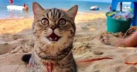 Ce chat qui découvre les joies d'une journée à la plage n'arrête pas de sourire