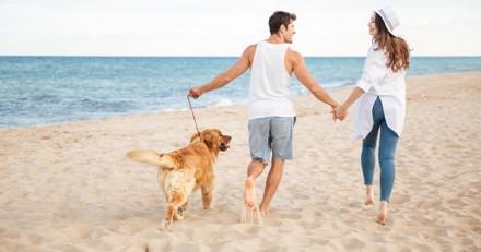 Été 2018 : les plages de France autorisées aux chiens