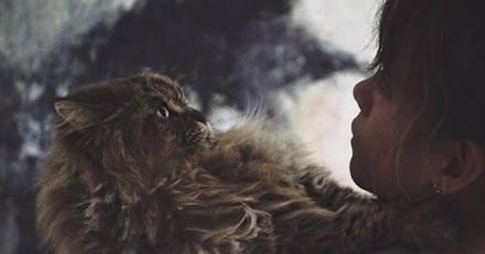 En deuil après la mort de son chat, l'actrice Halle Berry lui rend un dernier hommage émouvant