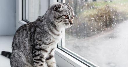 Son chat fixe quelque chose par la fenêtre : sa maîtresse jette un œil, attrape le matou et ouvre la porte !