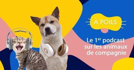 À POILS : le 1er podcast sur les animaux de compagnie débarque dans vos oreilles avec Natoo !