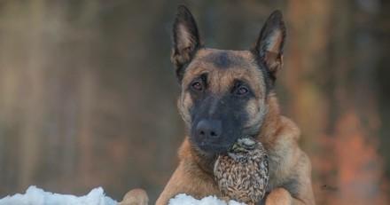 Cette amitié insolite entre un chien et une chouette va vous faire craquer !
