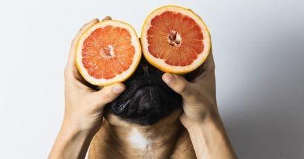 Le pomélo est-il un bon fruit pour les chiens ?