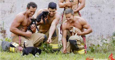 Découvrez LE calendrier idéal qui allie beaux hommes et animaux mignons
