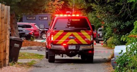 Une chatte errante s'approche des pompiers en tremblant, ce qu'elle porte sur elle leur glace le sang