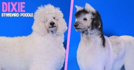 Une émission télévisée relooke des chiens en animaux sauvages au détriment du bien-être animal