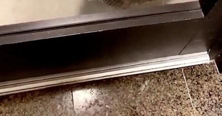 Elle est au travail quand elle entend des bruits bizarres devant la porte et appelle sa colocataire au secours (vidéo)