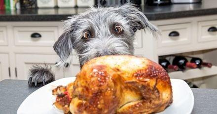 Ces 3 aliments de Noël sont très dangereux pour votre chien !